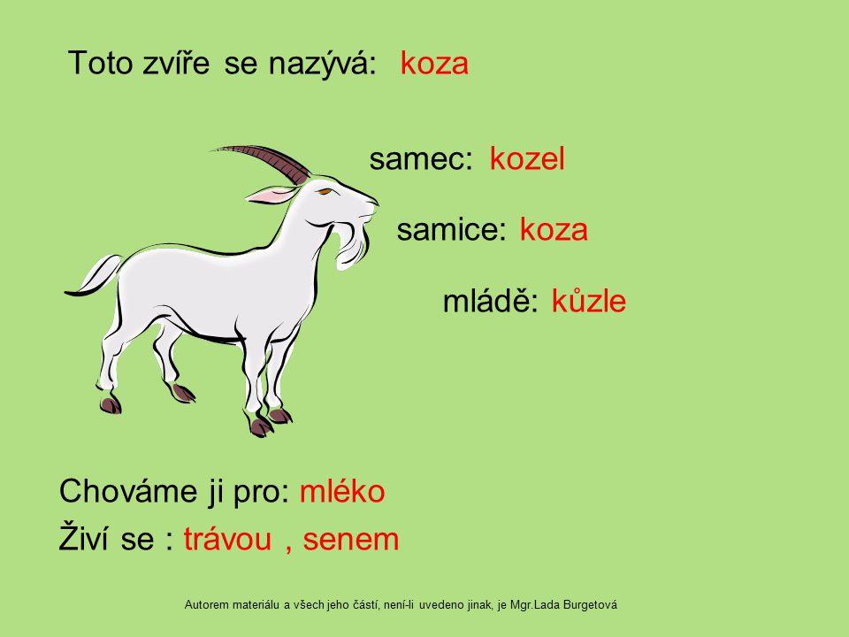 Toto zvíře se nazývá: koza samec: kozel samice: koza mládě: kůzle Chováme ji pro: mléko Živí se : trávou , senem