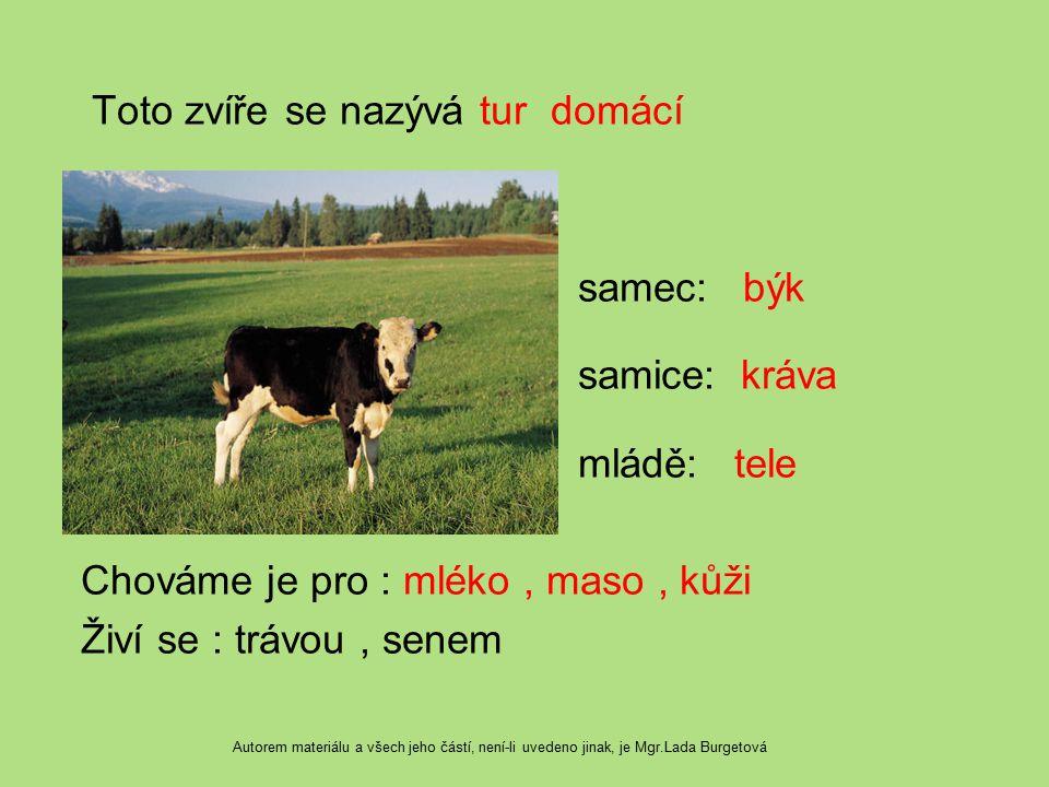 Toto zvíře se nazývá tur domácí samec: býk samice: kráva mládě: tele Chováme je pro : mléko , maso , kůži Živí se : trávou , senem
