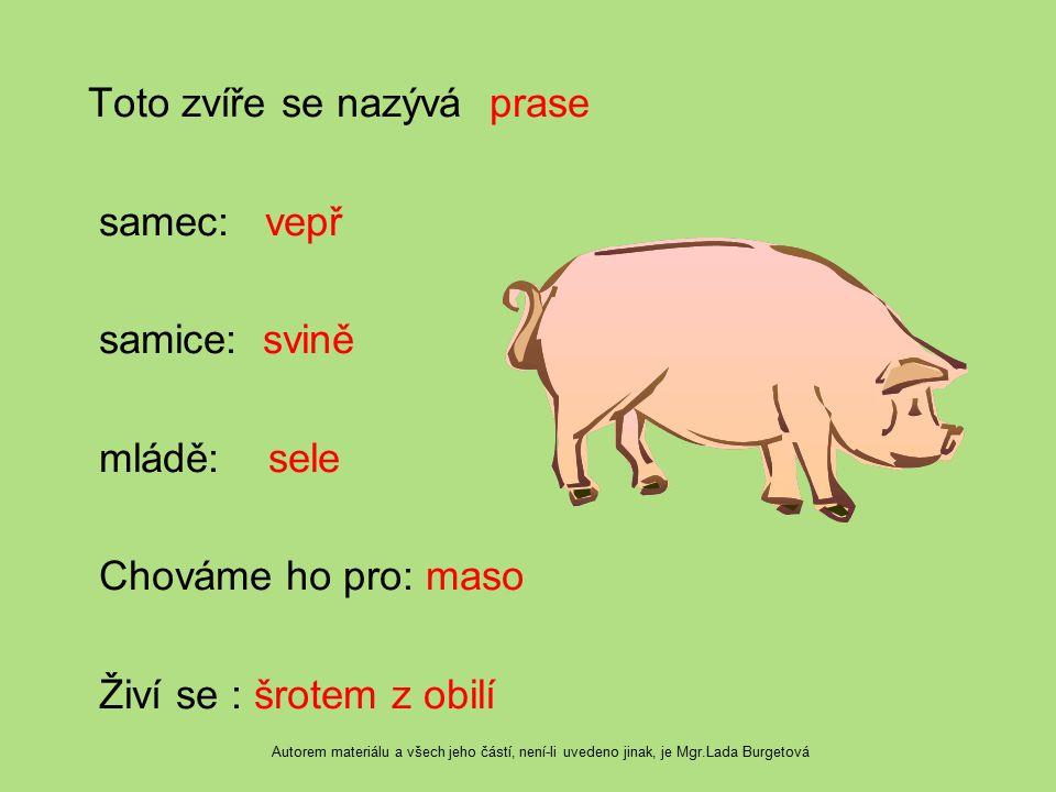 Toto zvíře se nazývá prase samec: vepř samice: svině mládě: sele