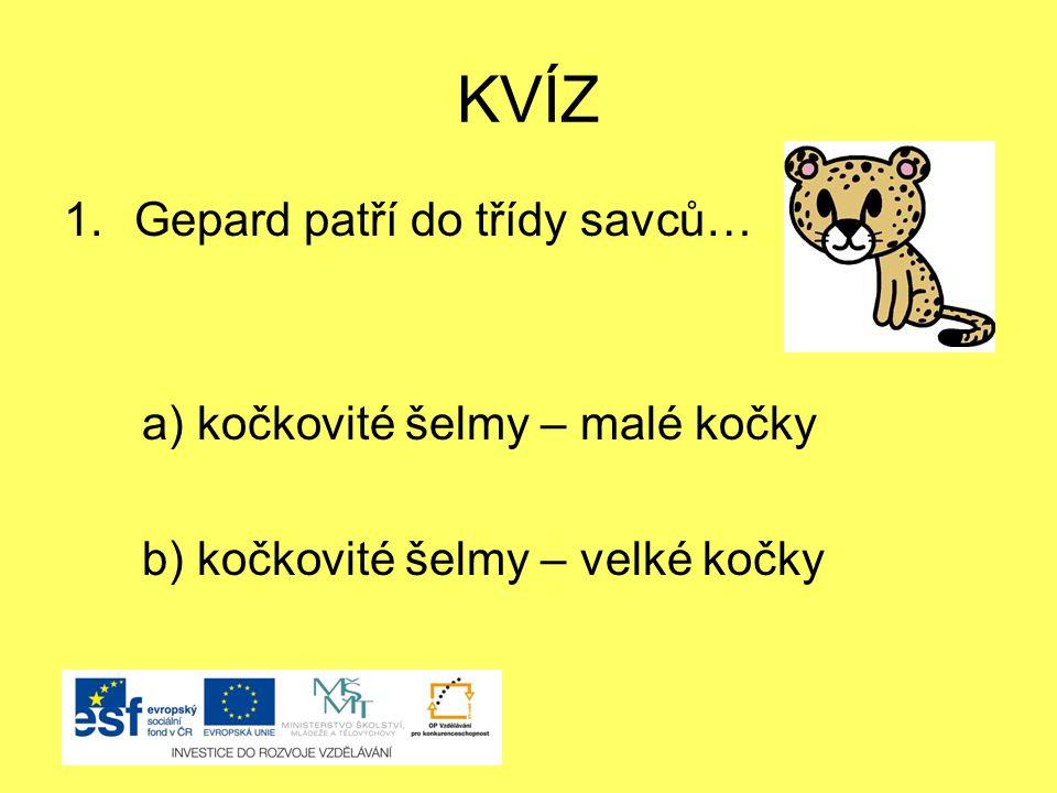 KVÍZ Gepard patří do třídy savců… a) kočkovité šelmy – malé kočky