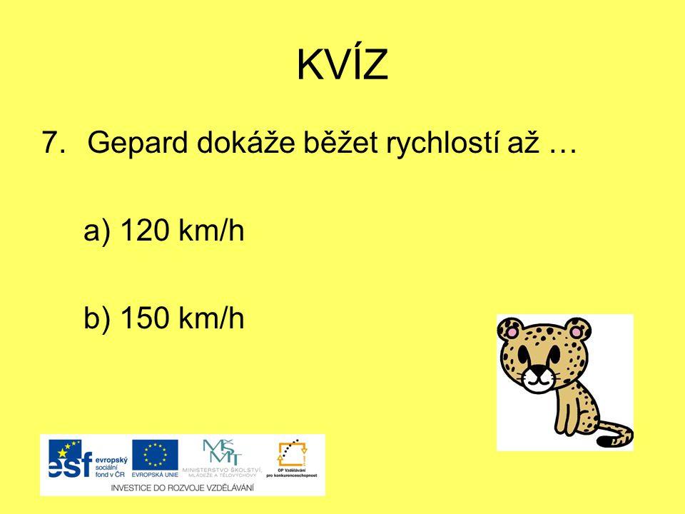 KVÍZ Gepard dokáže běžet rychlostí až … a) 120 km/h b) 150 km/h