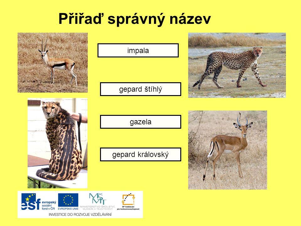 Přiřaď správný název impala gepard štíhlý gazela gepard královský