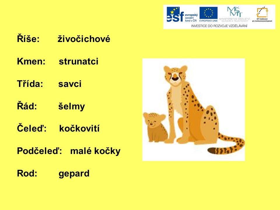 Říše: živočichové Kmen: strunatci. Třída: savci. Řád: šelmy. Čeleď: kočkovití.