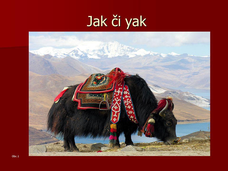 Jak či yak Obr. 1