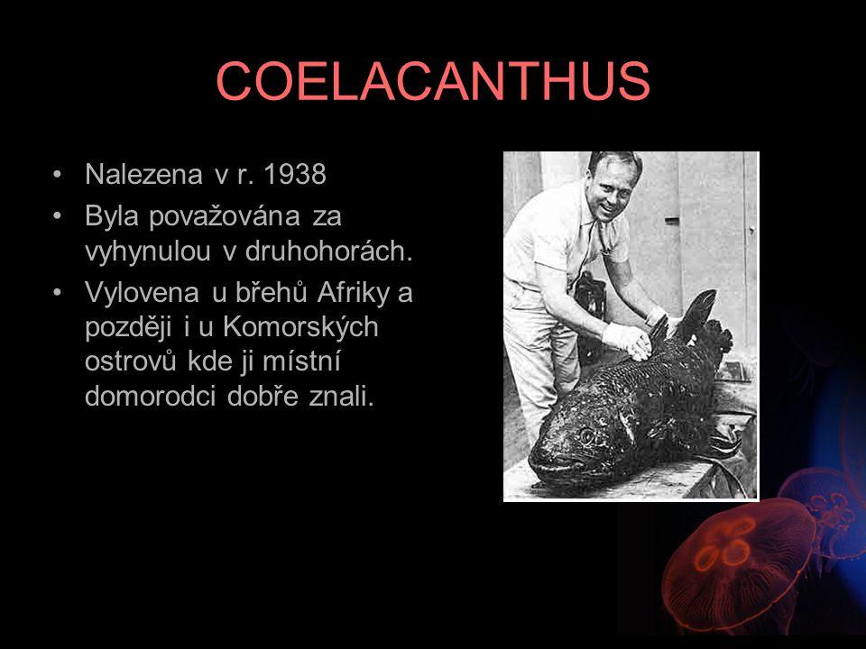 COELACANTHUS Nalezena v r. 1938