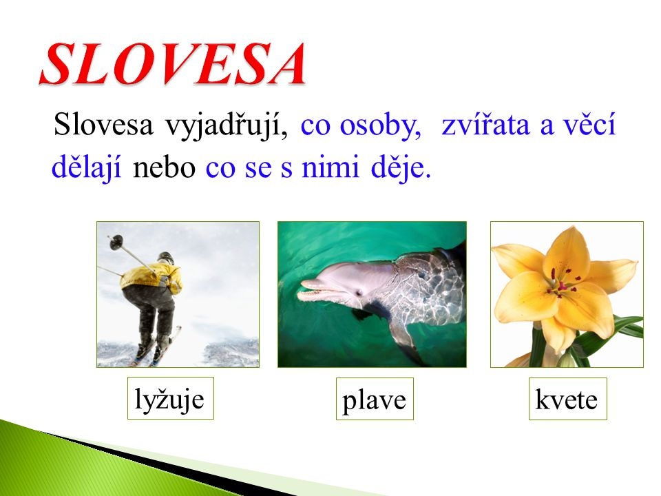 SLOVESA Slovesa vyjadřují, co osoby, zvířata a věcí dělají nebo co se s nimi děje. lyžuje. plave.