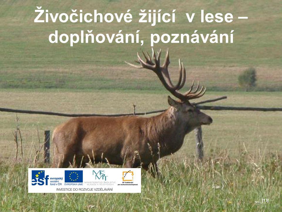 Živočichové žijící v lese – doplňování, poznávání