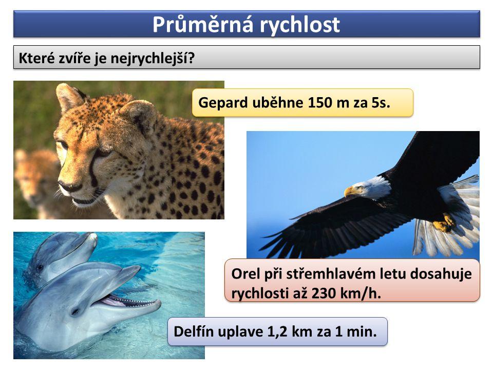 Průměrná rychlost Které zvíře je nejrychlejší