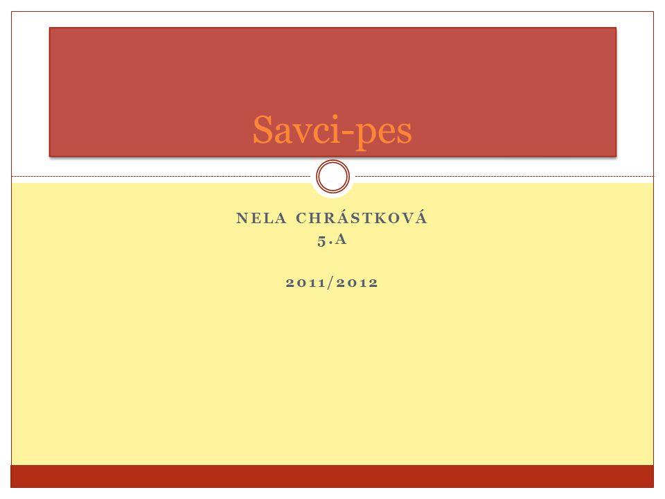 Savci-pes Nela chrástková 5.A 2011/2012