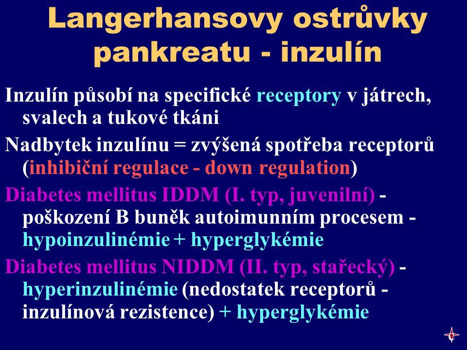 Langerhansovy ostrůvky pankreatu - inzulín