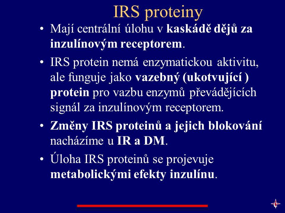 IRS proteiny Mají centrální úlohu v kaskádě dějů za inzulínovým receptorem.
