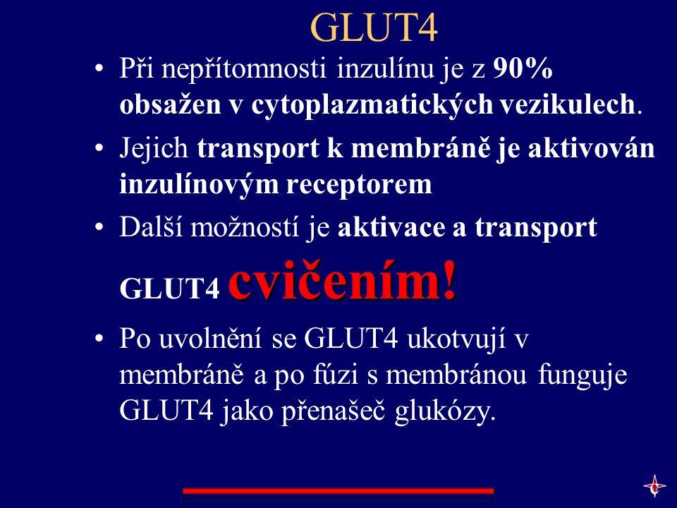 GLUT4 Při nepřítomnosti inzulínu je z 90% obsažen v cytoplazmatických vezikulech. Jejich transport k membráně je aktivován inzulínovým receptorem.