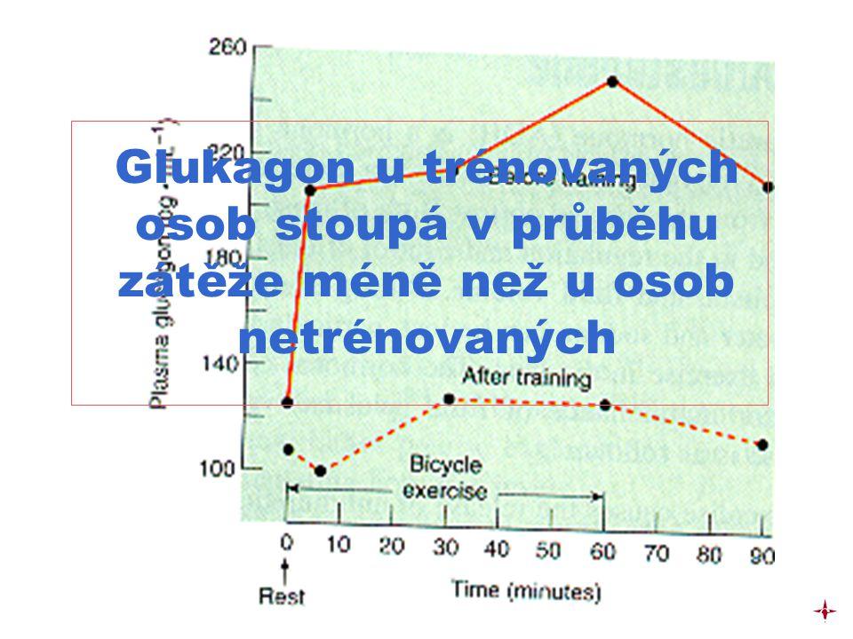 Glukagon u trénovaných osob stoupá v průběhu zátěže méně než u osob netrénovaných