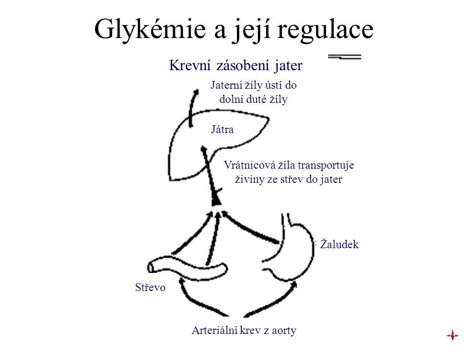 Glykémie a její regulace