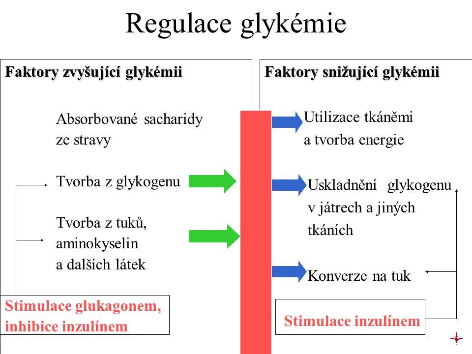 Regulace glykémie Faktory zvyšující glykémii Absorbované sacharidy
