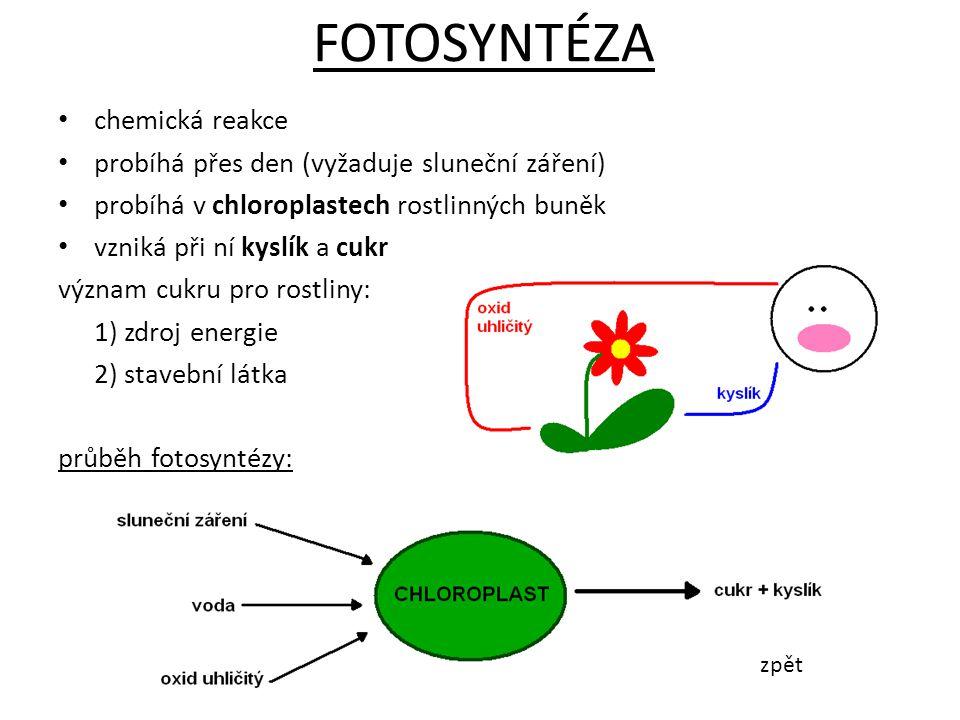 FOTOSYNTÉZA chemická reakce
