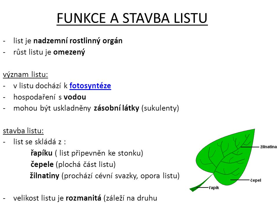 FUNKCE A STAVBA LISTU list je nadzemní rostlinný orgán