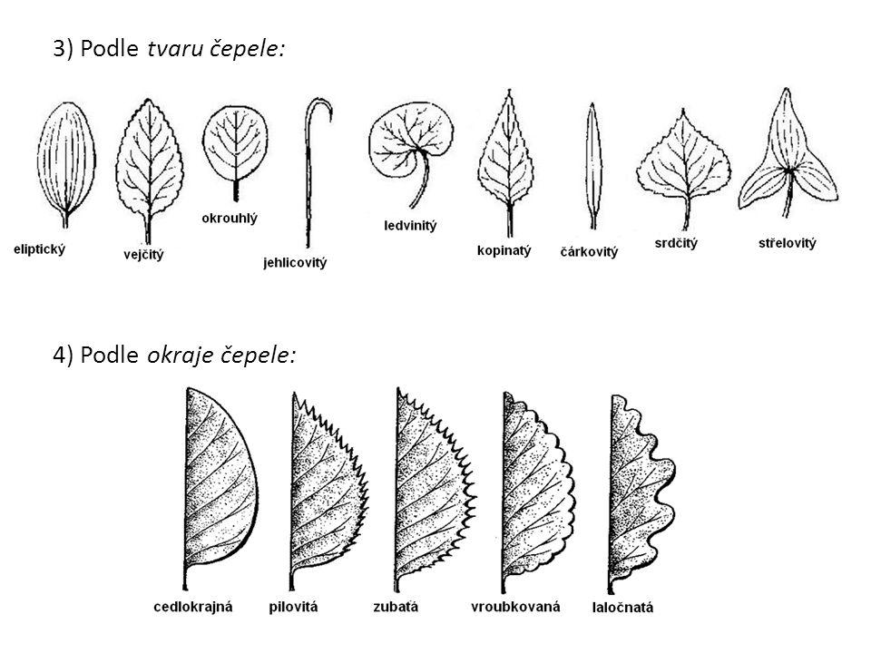 3) Podle tvaru čepele: 4) Podle okraje čepele:
