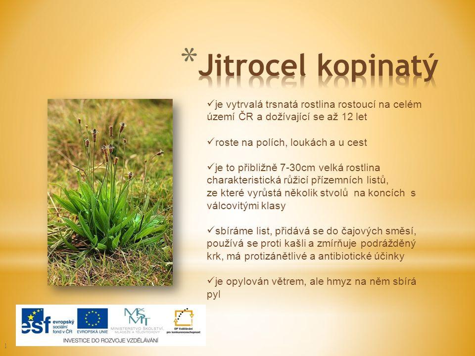 Jitrocel kopinatý je vytrvalá trsnatá rostlina rostoucí na celém území ČR a dožívající se až 12 let.
