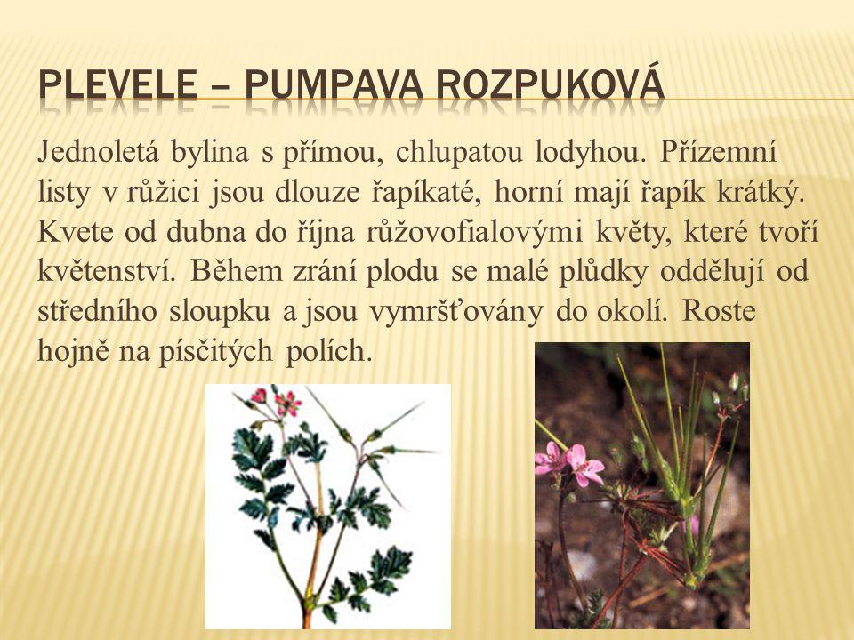 plevele – pumpava rozpuková