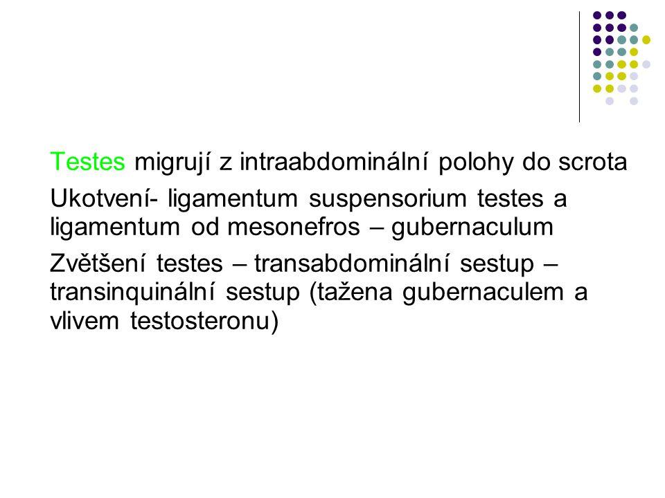 Testes migrují z intraabdominální polohy do scrota