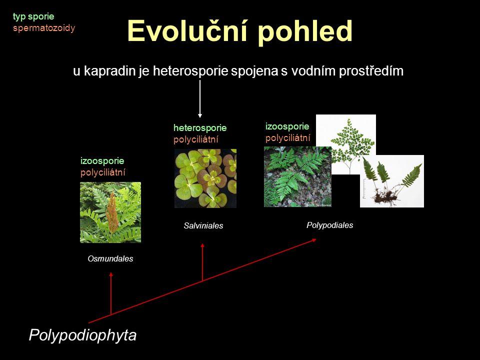 Evoluční pohled Polypodiophyta