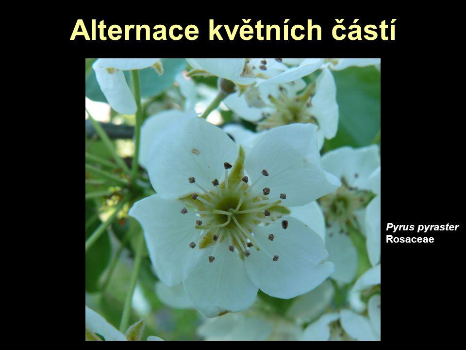 Alternace květních částí