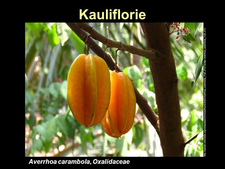 Kauliflorie Averrhoa carambola, Oxalidaceae