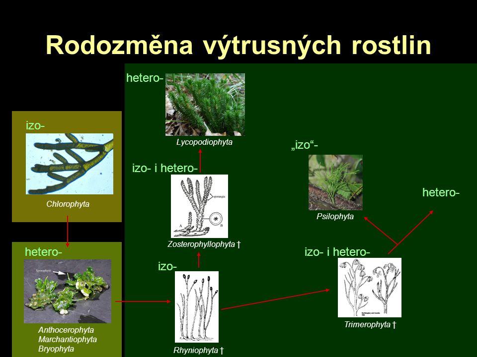 Rodozměna výtrusných rostlin