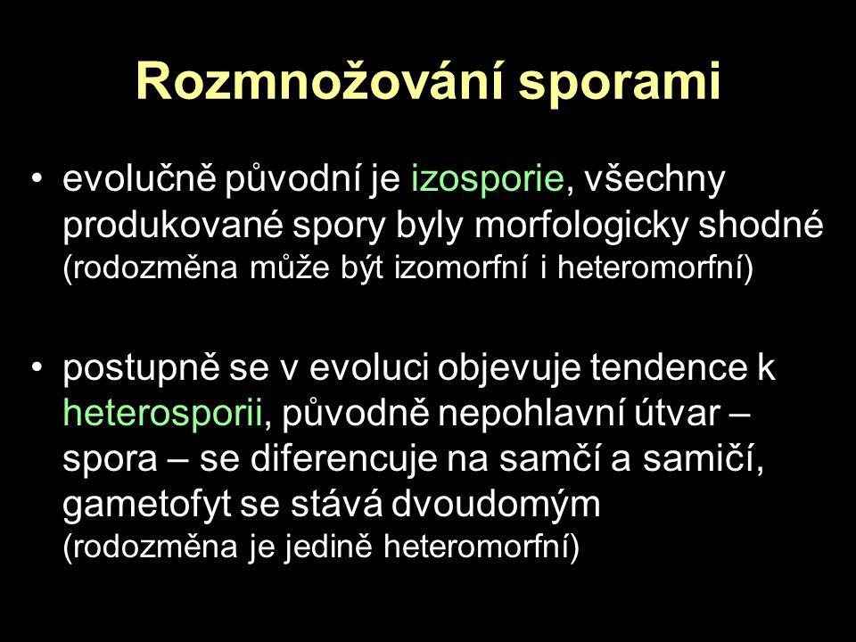Rozmnožování sporami evolučně původní je izosporie, všechny produkované spory byly morfologicky shodné (rodozměna může být izomorfní i heteromorfní)