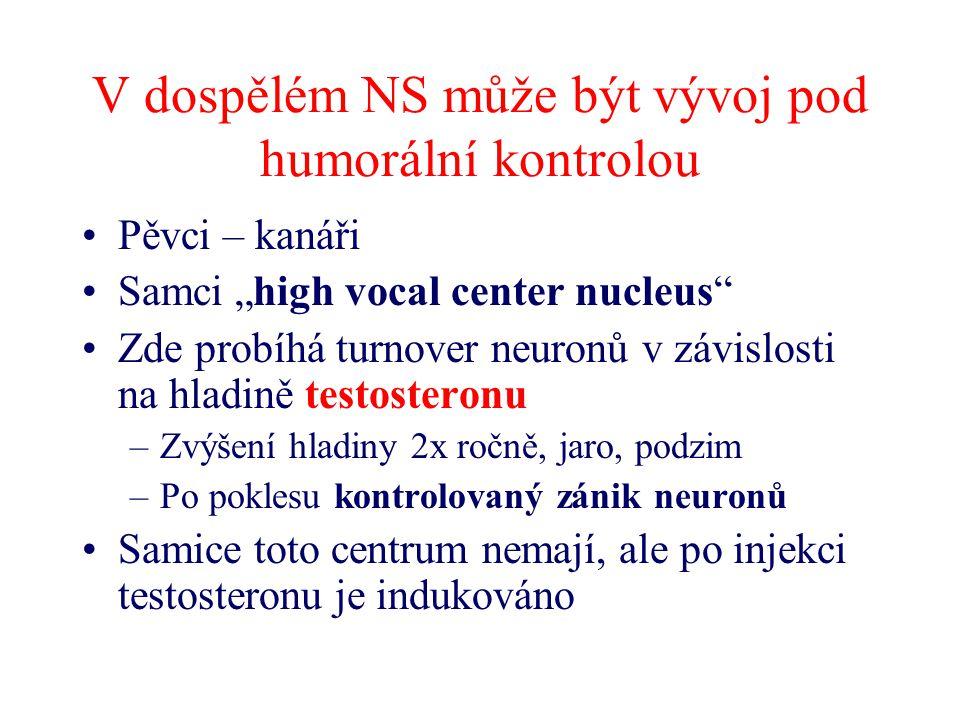 V dospělém NS může být vývoj pod humorální kontrolou