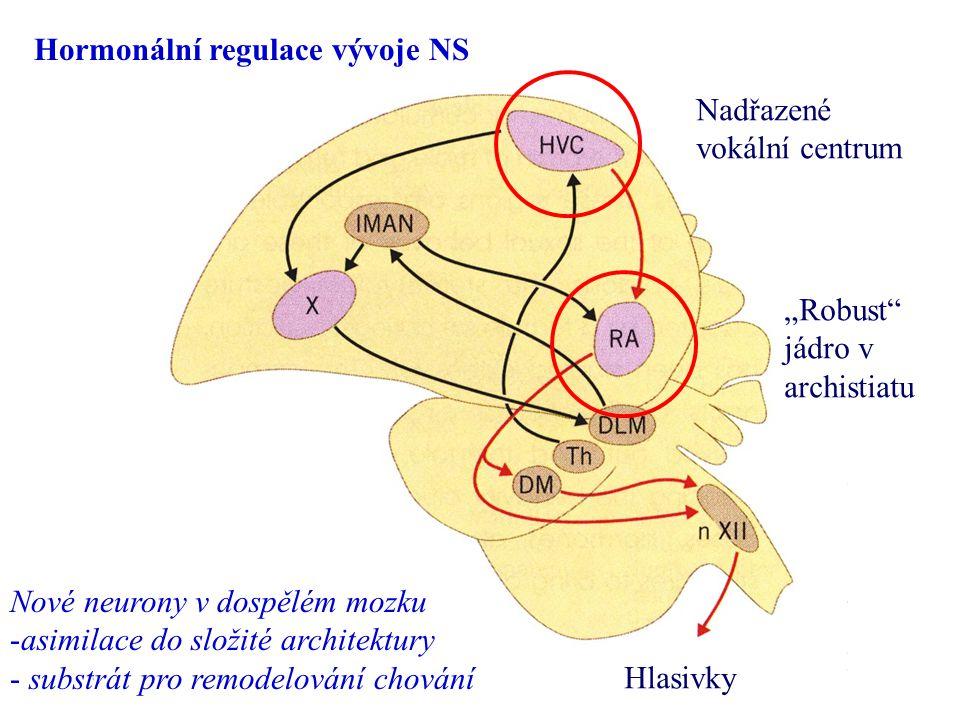Hormonální regulace vývoje NS