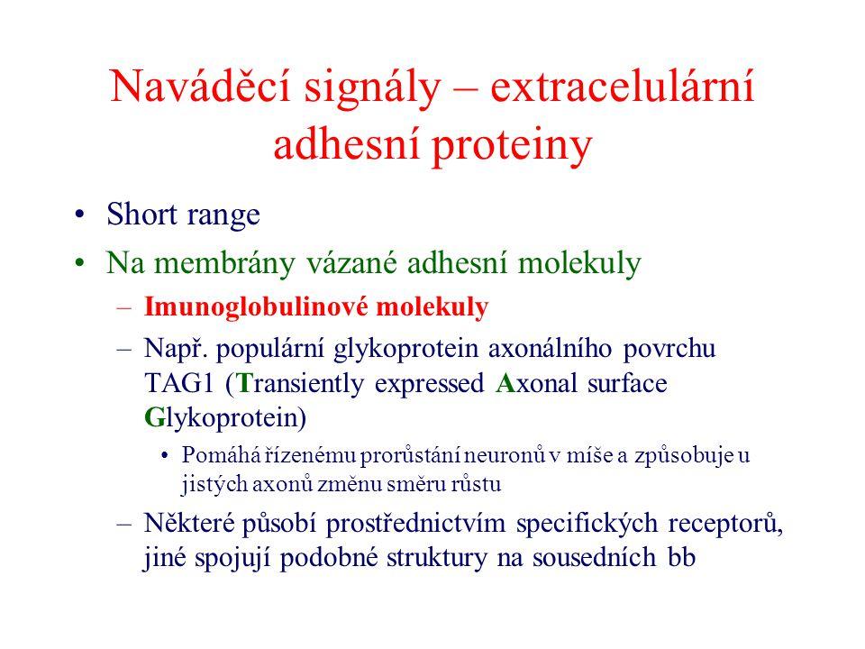 Naváděcí signály – extracelulární adhesní proteiny