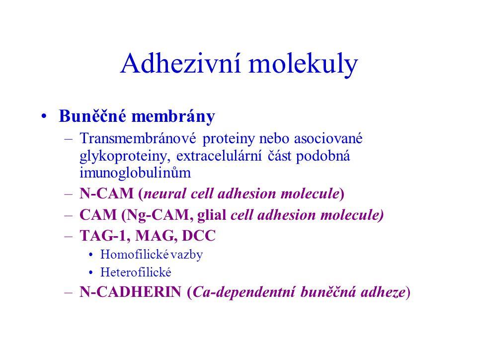 Adhezivní molekuly Buněčné membrány