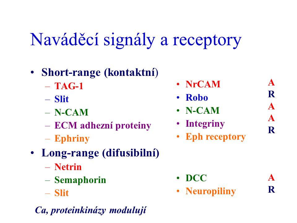 Naváděcí signály a receptory