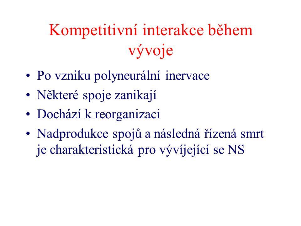 Kompetitivní interakce během vývoje