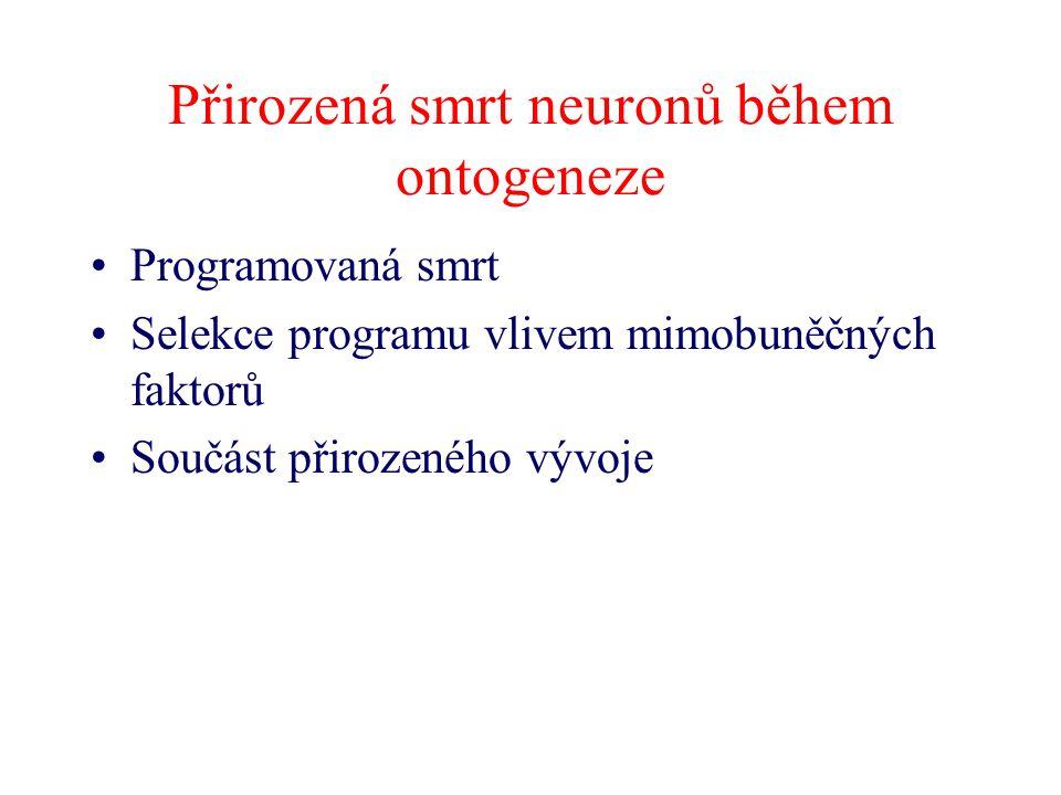 Přirozená smrt neuronů během ontogeneze