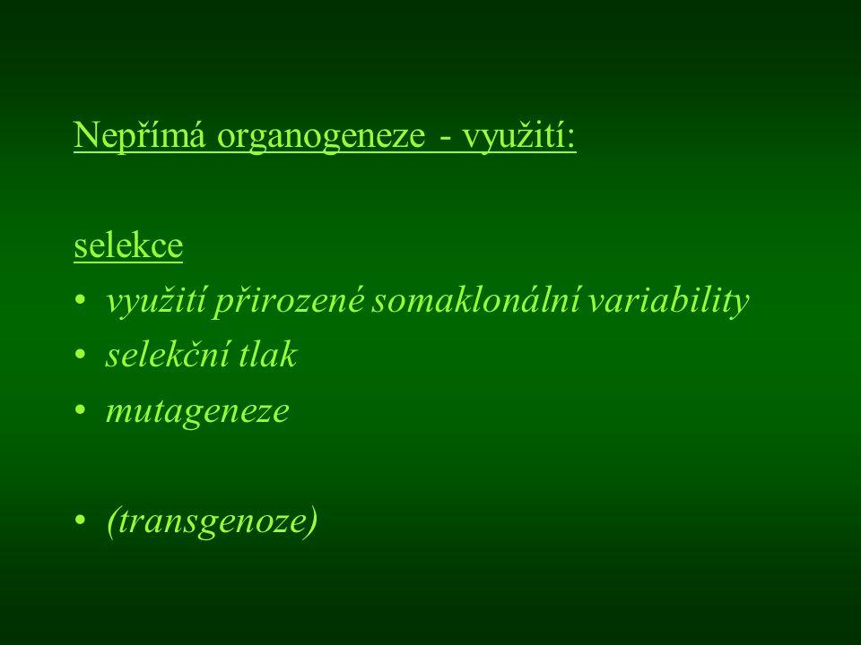 Nepřímá organogeneze - využití: