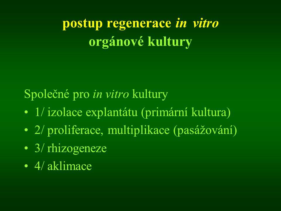 postup regenerace in vitro orgánové kultury