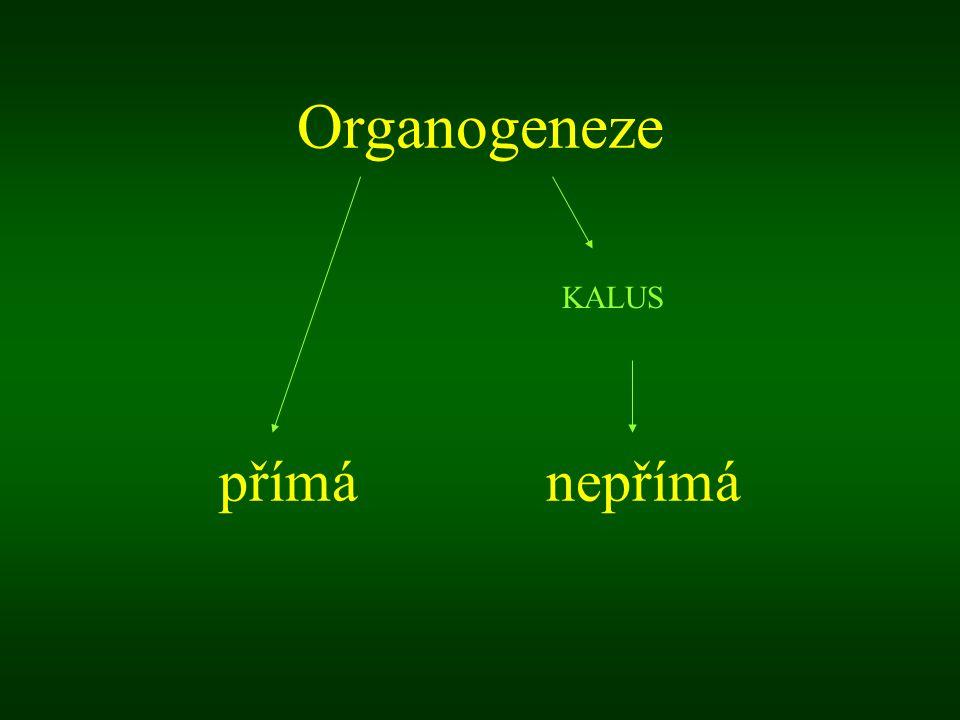Organogeneze přímá nepřímá