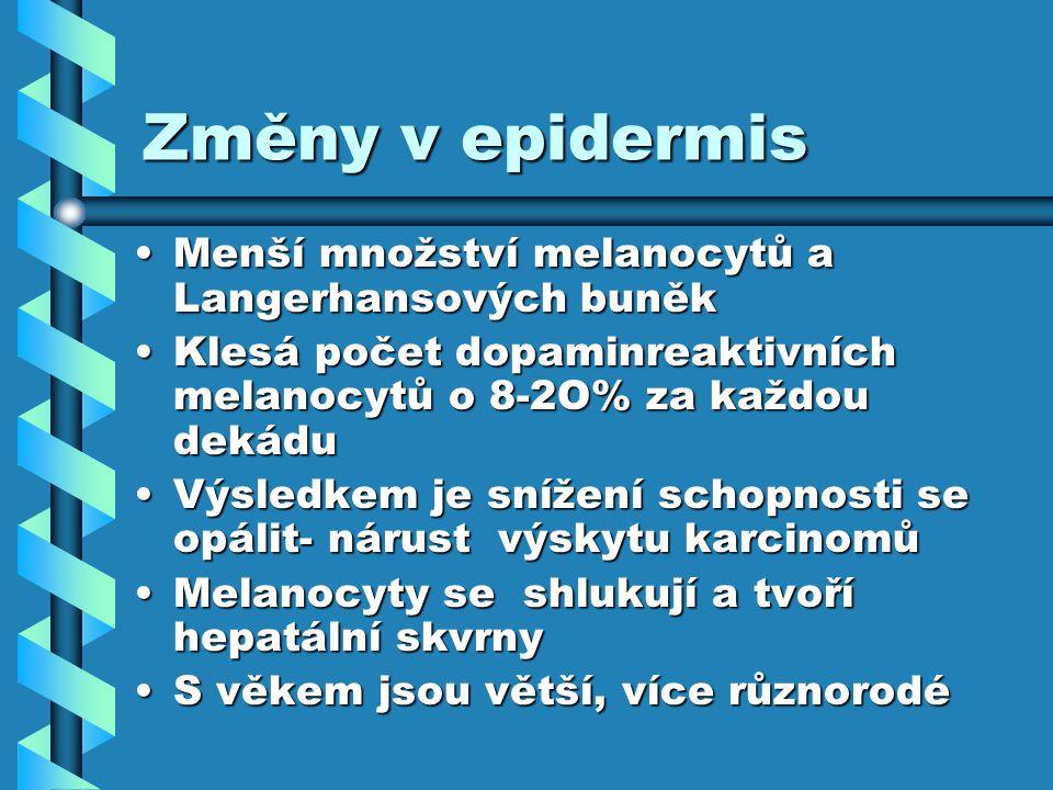 Změny v epidermis Menší množství melanocytů a Langerhansových buněk