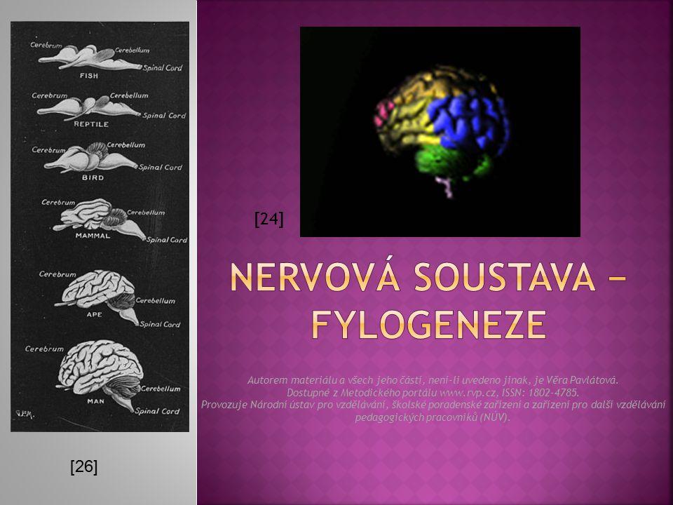 nervová SOUSTAVA − FYLOGENEZE