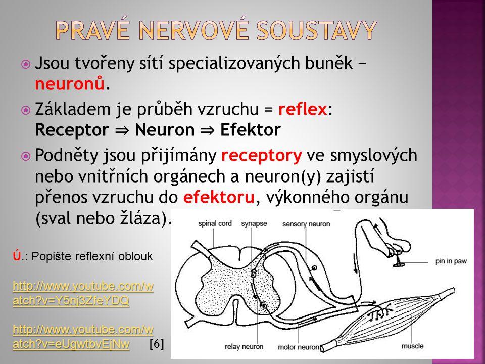 Pravé nervové soustavy