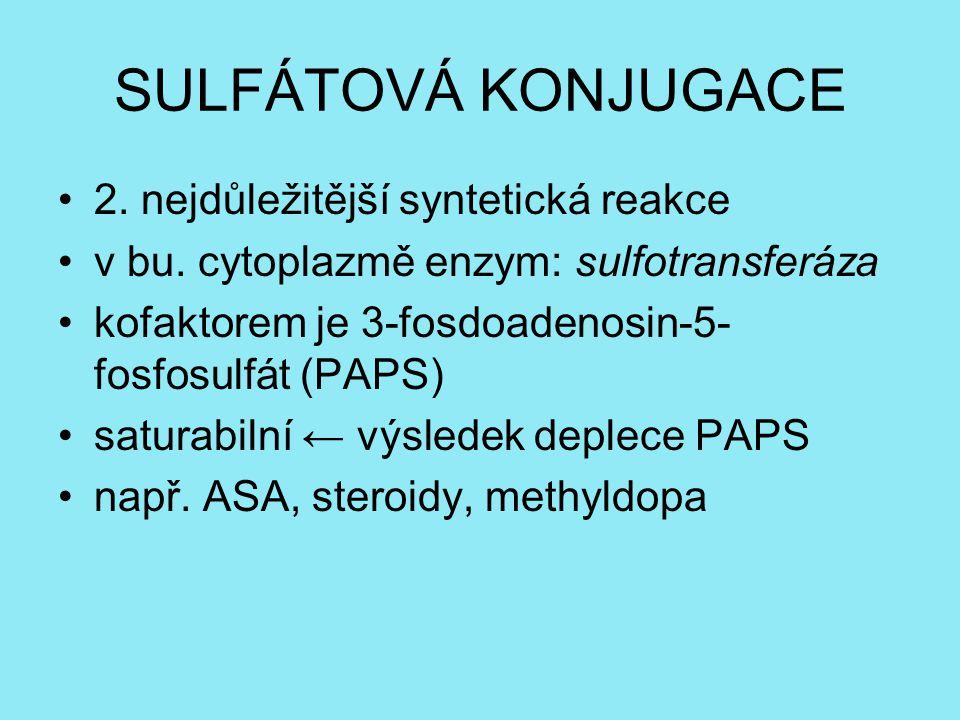 SULFÁTOVÁ KONJUGACE 2. nejdůležitější syntetická reakce