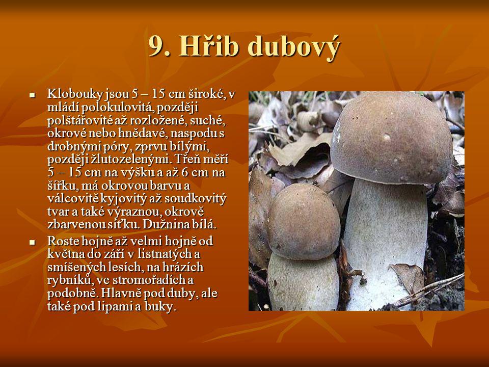 9. Hřib dubový
