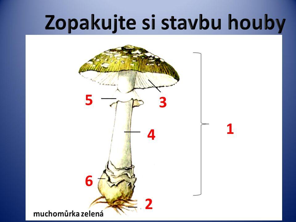 Zopakujte si stavbu houby