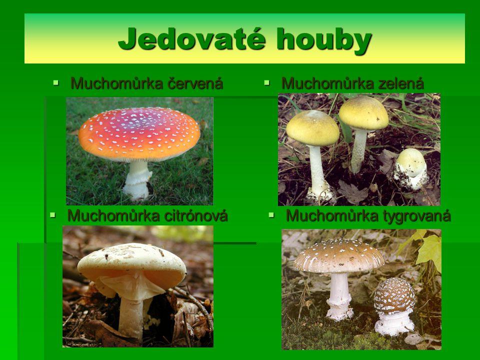 Jedovaté houby Muchomůrka červená Muchomůrka zelená