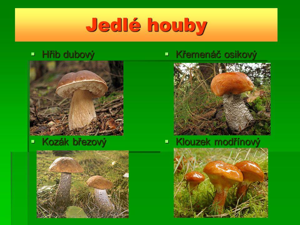 Jedlé houby Hřib dubový Křemenáč osikový Kozák březový