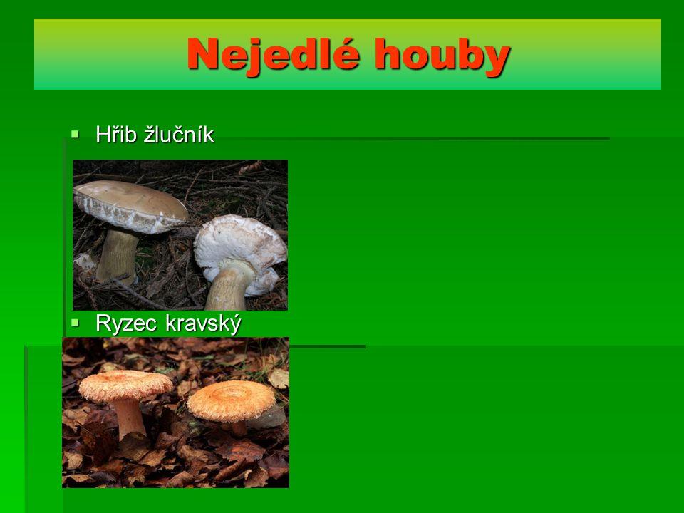 Nejedlé houby Hřib žlučník Ryzec kravský