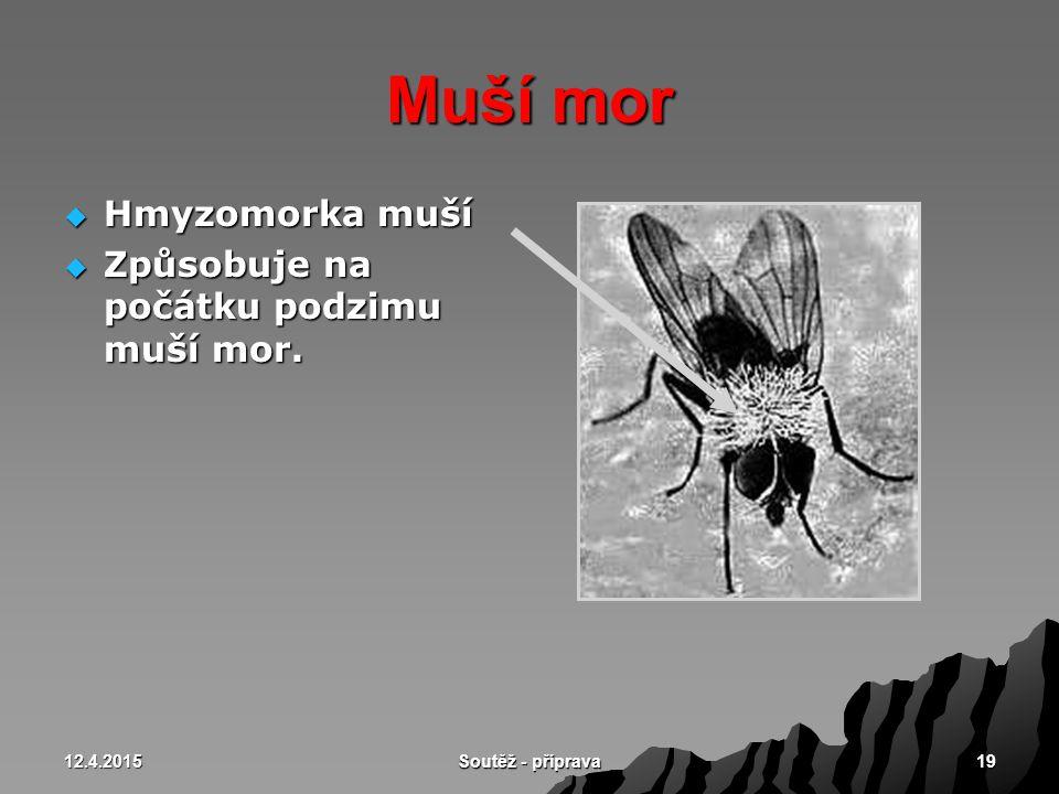 Muší mor Hmyzomorka muší Způsobuje na počátku podzimu muší mor.